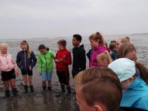 Wattenmeer 2019