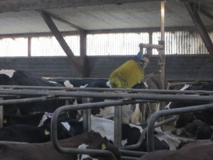 Bauernhof2