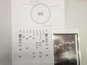 Bio-Praktikum HS Feb 2018 LR (26)